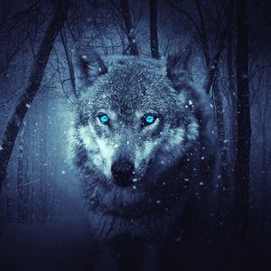 Превью обои волк, хищник, фотошоп, арт