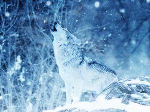 Превью обои волк, хищник, вой, фотошоп