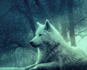 Превью обои волк, светлый, лес, дикий, спокойствие, умиротворение