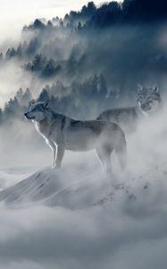Превью обои волк, волки, хищники, туман, снег, горы