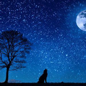 Превью обои волк, звездное небо, дерево, луна