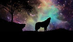 Превью обои волк, звездное небо, силуэт, арт