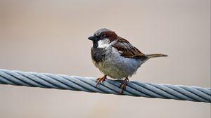 Превью обои воробей, птица, провод