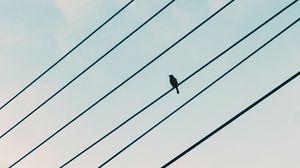 Превью обои воробей, птица, провода, небо