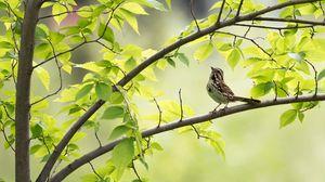 Превью обои воробей, птица, ветка, листья
