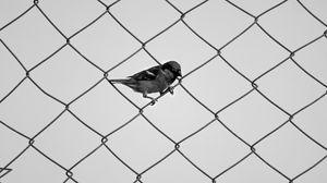 Превью обои воробей, забор, чб, сетка, птица, минимализм