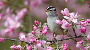 Превью обои воробей, птица, ветки, цветы, цветение
