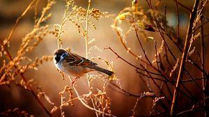 Превью обои воробей, птица, ветки, дерево, цветы