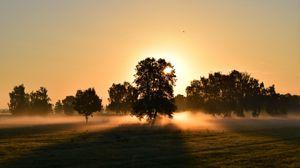 Превью обои восход, туман, деревья, рассвет, утро