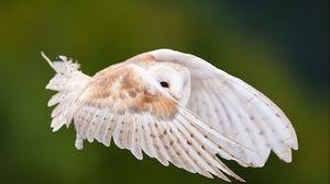 Превью обои взгляд, взмах, крылья, перья, полет, птица, сова
