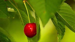 Превью обои ягода, вишня, ветка, листья
