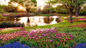 Превью обои япония, токио, утро, солнце, лучи, восход, парк, пруд, деревья, цветы, мускари, синие, тюльпаны, разноцветные