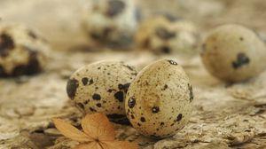 Превью обои яйца, пятнистый, перепелиный, лист