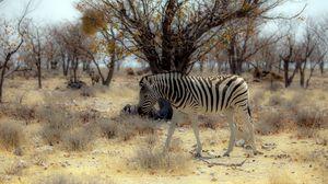 Превью обои зебра, природа, африка