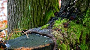Превью обои зеленый, дерево, зима, мох