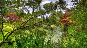 Превью обои зеленый, сад, деревья, пруд, кувшинки, флора