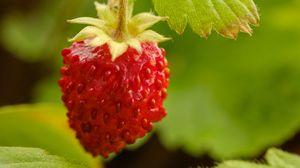 Превью обои земляника, ягода, красный, макро, растение