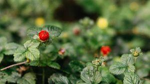 Превью обои земляника, ягода, листья, макро, фрукт