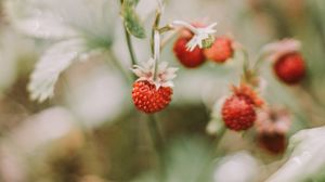 Превью обои земляника, ягоды, красный, спелый, макро