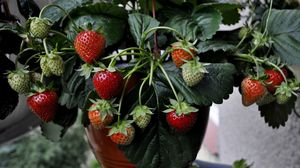 Превью обои земляника, клубника, ягоды