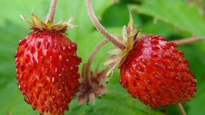 Превью обои земляника, лесная ягода, листья, спелый