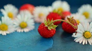 Превью обои земляника, ромашка, ягоды