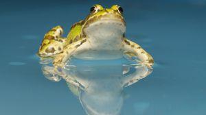 Превью обои жаба, вода, пятна