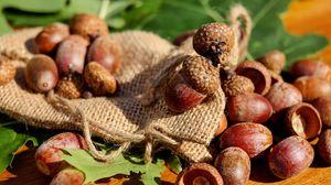 Превью обои желуди, мешок, орехи, плоды