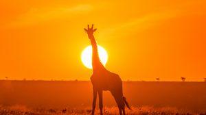 Превью обои жираф, силуэт, свет, солнце, закат