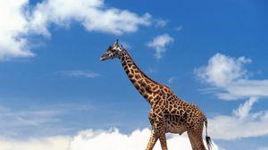 Превью обои жираф, трава, небо, облака, прогулка