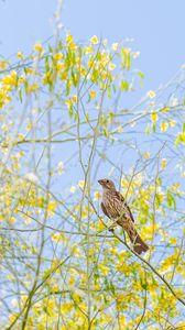 Превью обои зяблик, птица, ветки, дикая природа