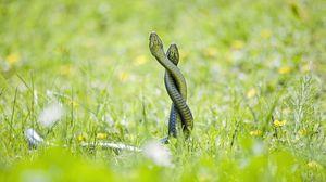 Превью обои змеи, трава, выглядывать