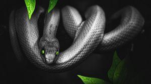 Превью обои змея, фотошоп, листья, глаза, рептилия