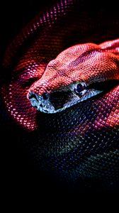 Превью обои змея, рептилия, красный, темный, чешуя