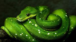 Превью обои змея, зеленый, пресмыкающееся, дикая природа