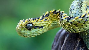 Превью обои змея, чешуя, глаза
