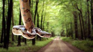 Превью обои змея, дорога, трава, деревья, размытость