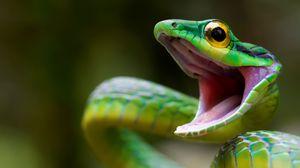 Превью обои змея, green snake, costa rica
