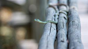 Превью обои змея, маленькая, бревна, ползти