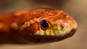 Превью обои змея, удав, рептилия, глаза