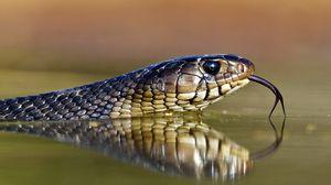 Превью обои змея, язык, глаза