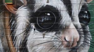 Превью обои зверек, граффити, арт, стрит арт, стена
