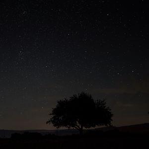 Превью обои звездное небо, дерево, ночь, небо