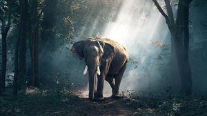 Превью обои слон, лес, деревья, солнечный свет, тень