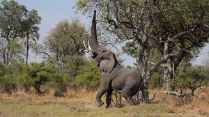 Превью обои слон, трава, деревья