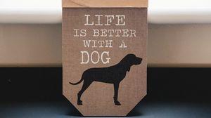 Превью обои слова, надпись, собака, фраза