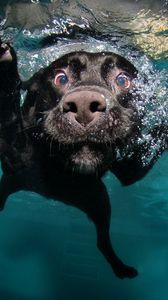 Превью обои собака, черная, под водой, плавает, вода