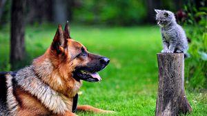 Превью обои собака, котенок, трава, немецкая овчарка