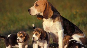Превью обои собака, щенки, трава, сидеть