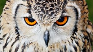 Превью обои сова, клюв, глаза, крупным планом